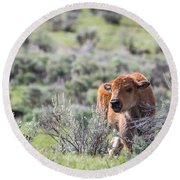 Round Beach Towel featuring the photograph Bison Calf by Michael Chatt
