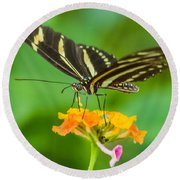Round Beach Towel featuring the photograph Zebra Longwing by Jane Luxton