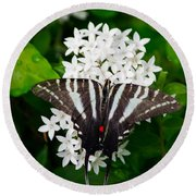 Zebra Swallowtail Round Beach Towel