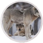 Timber Wolves  Round Beach Towel
