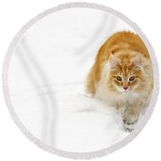 111230p310 Round Beach Towel by Arterra Picture Library