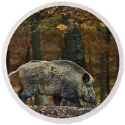 Round Beach Towel featuring the photograph 121213p284 by Arterra Picture Library