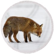 Round Beach Towel featuring the photograph 130201p051 by Arterra Picture Library
