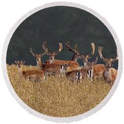 Round Beach Towel featuring the photograph 130201p298 by Arterra Picture Library