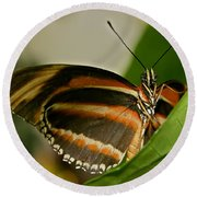 Round Beach Towel featuring the photograph Butterfly by Olga Hamilton