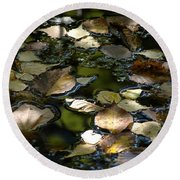 Round Beach Towel featuring the photograph Autumn Light by Christiane Hellner-OBrien
