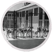 1930s Kennel Yard Full Of Foxhound Dogs Round Beach Towel