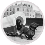 1930s Two Dachshund Dogs One Pulling Round Beach Towel