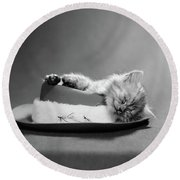 1960s Cat Curled Up And Asleep On An Round Beach Towel