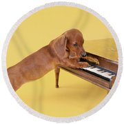 1960s Dachshund Puppy Playing Toy Piano Round Beach Towel