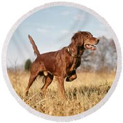 1960s Irish Setter Hunting Dog On Point Round Beach Towel
