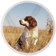 1970s Hunting Dog In Autumn Field Round Beach Towel