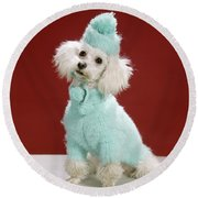 1970s White Poodle Wearing Blue Sweater Round Beach Towel