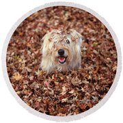 1990s Dog Covered In Leaves Round Beach Towel