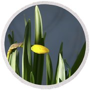 Round Beach Towel featuring the photograph 1st Daff by Joe Schofield