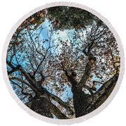Round Beach Towel featuring the photograph 1st Tree by Gandz Photography