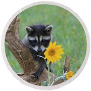 Baby Raccoon Round Beach Towel by M. Watson
