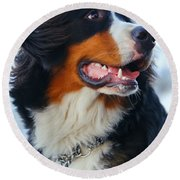 Beautiful Dog Portrait Round Beach Towel