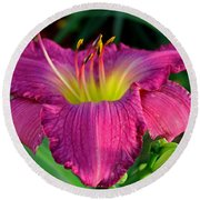 Round Beach Towel featuring the photograph Bela Lugosi Daylily by Suzanne Stout