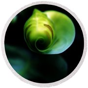 Round Beach Towel featuring the photograph Birth Of A Leaf by Lilliana Mendez