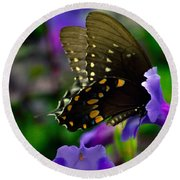 Black Swallowtail Round Beach Towel