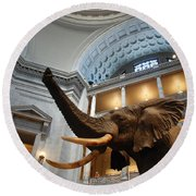 Bull Elephant In Natural History Rotunda Round Beach Towel