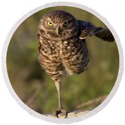 Burrowing Owl Photograph Round Beach Towel