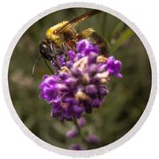 Carpenter Bee On A Lavender Spike Round Beach Towel