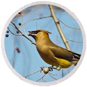 Cedar Waxwing With Berry Round Beach Towel by Robert Frederick