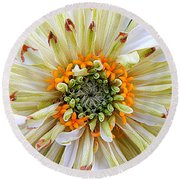 Chrysanthemum Fall In New Orleans Louisiana Round Beach Towel by Michael Hoard