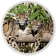 Clouded Leopards Round Beach Towel