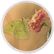 Clouded Sulphur Butterfly Round Beach Towel by Betty LaRue