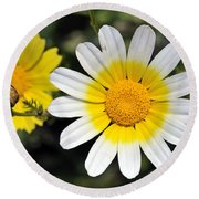 Round Beach Towel featuring the photograph Crown Daisy Flower by George Atsametakis