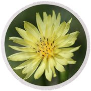 Round Beach Towel featuring the photograph Dandelion by Ester  Rogers