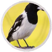 Fencepost Magpie Round Beach Towel by Jorgo Photography - Wall Art Gallery