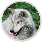 Round Beach Towel featuring the photograph Gray Wolf by Alyce Taylor