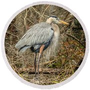 Great Blue Heron Round Beach Towel by Jane Luxton