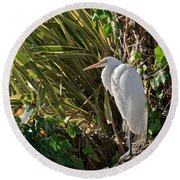 Round Beach Towel featuring the photograph Great Egret by Kate Brown