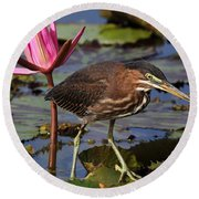 Green Heron Photo Round Beach Towel