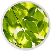 Green Spring Leaves Round Beach Towel