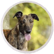 Greyhound Dog Round Beach Towel
