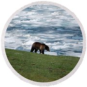 Round Beach Towel featuring the photograph Grizzly Bear On Frozen Lake Yellowstone by Shawn O'Brien