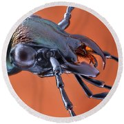 Ground Beetle Round Beach Towel