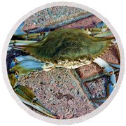 Round Beach Towel featuring the photograph Hudson River Crab by Lilliana Mendez