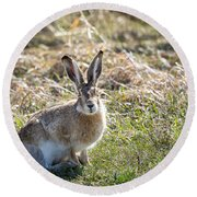 Round Beach Towel featuring the photograph Jackrabbit by Michael Chatt