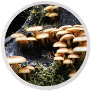 Round Beach Towel featuring the photograph Mushrooms On A Stump by Chalet Roome-Rigdon
