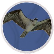 Round Beach Towel featuring the photograph Osprey In Flight Photo by Meg Rousher
