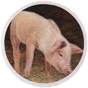 Pig Round Beach Towel by David Stribbling