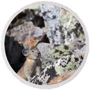Round Beach Towel featuring the photograph Pika by Michael Chatt