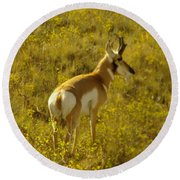 Pronghorn Round Beach Towel